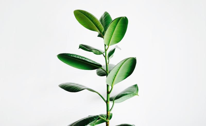 green plant blog